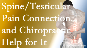 Yorkville Chiropractic and Wellness Centre explains recent research on the connection of testicular pain to the spine and how chiropractic care helps its relief.